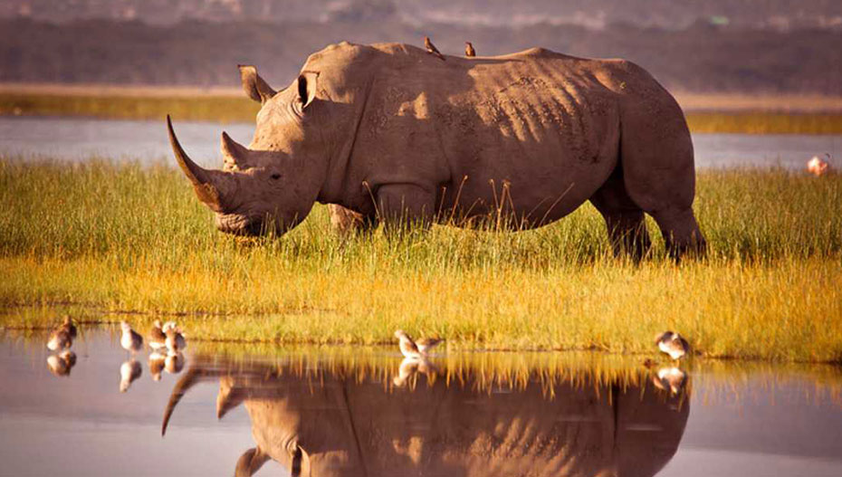 Εξαφανίστηκε το 60% των ζώων  μέσα σε διάστημα 40 χρόνων